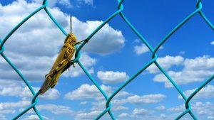 grasshopper-2705955_1920